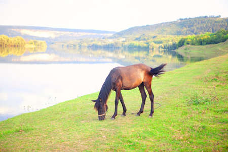 Tranquil scene with grazing horse . Wild horse on the green shore Stok Fotoğraf - 155072981