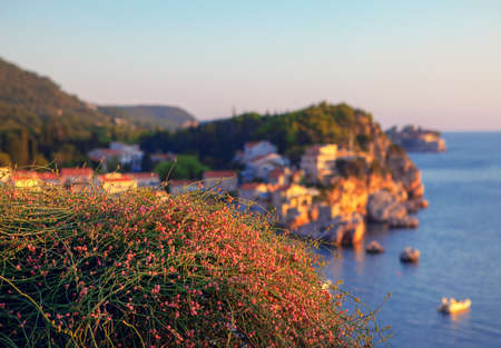Seaside garden . Pink flowers growing above beach