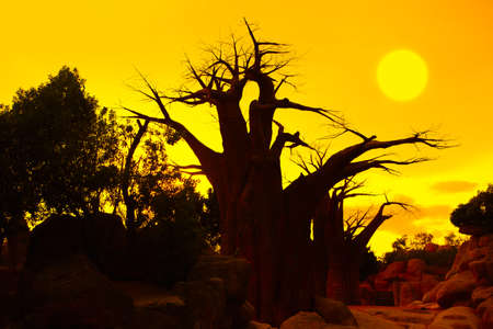 African sunset with baobab tree silhouette