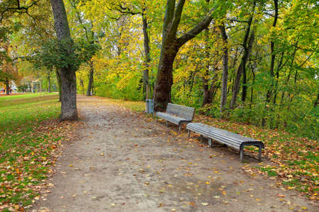 Walking in the fall season park . Footpath and benches in the autumn park Stok Fotoğraf