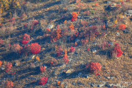 Red bushes growing on the rocky hill in the autumn Stok Fotoğraf