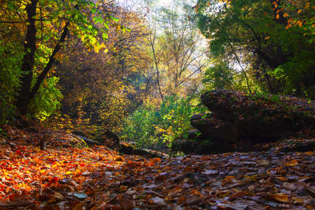 Autumn in forest with colorful  foliage