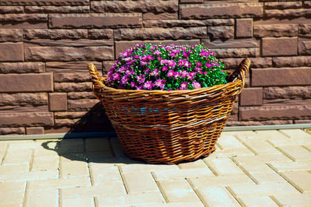 Decorative flowers growing in the basket Stok Fotoğraf
