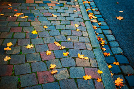 Pavement with yellow leaves in november