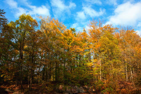 Fall Forest Nature with Colorful Trees 스톡 콘텐츠