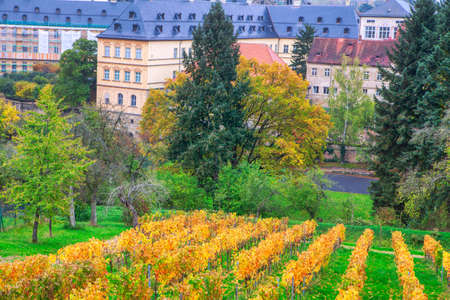 Vineyard plantations in autumn with commanding views of the Bamberg city in Germany