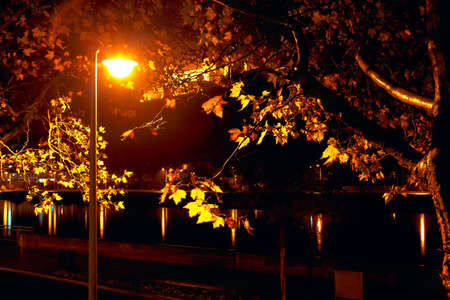 Autumn night with street lamp . Night time in the fall on the Main riverside in Wurzburg Germany