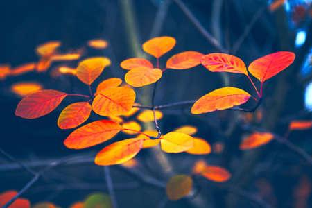 Fall Colorful Foliage . Leaves autumn colors