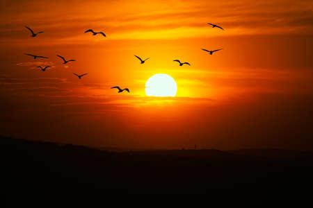 African sun dial in the dusk  . Flock of birds flying on the tilight sky 스톡 콘텐츠