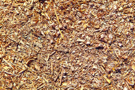Forage and straw for cattle feeding
