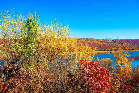 Multicolored branches treetops in the autumn . Forest growing on the lakeside