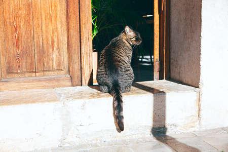 Domestic cat standing in the doorway