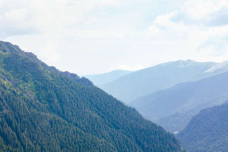 Green mountains range with coniferous forest Stok Fotoğraf