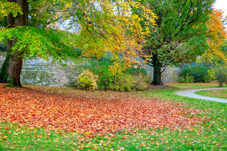 Pile of autumn leaves in the park