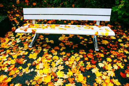 White bench in the autumn park with colorful leaves