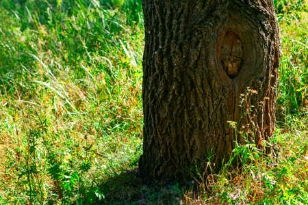 Tree trunk in the grass with sunlight
