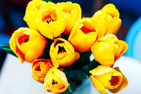 Fresh and yellow tulips in soft light Stok Fotoğraf