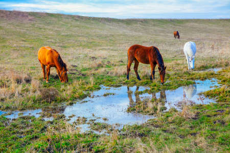 Horses on the meadow with water . Four horses on the pasture after the rain Stockfoto