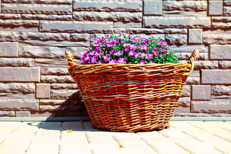 Rustic basket with fresh decorative flowers . Blooming flowers and wall Stockfoto