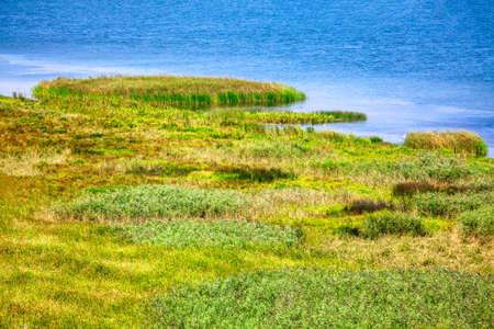 Coastal nature reserve with green reed . Birds paradise Stockfoto