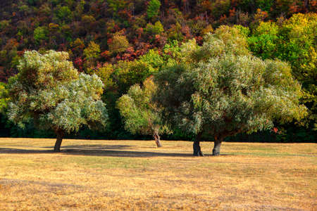 Meadow with trees . Colorful scenery of early autumn