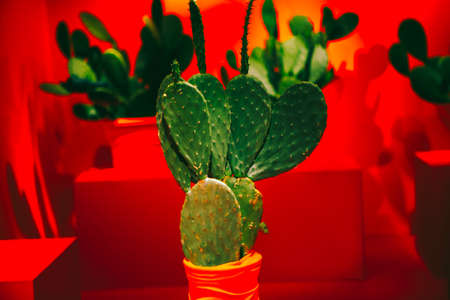 Green cactus in red room