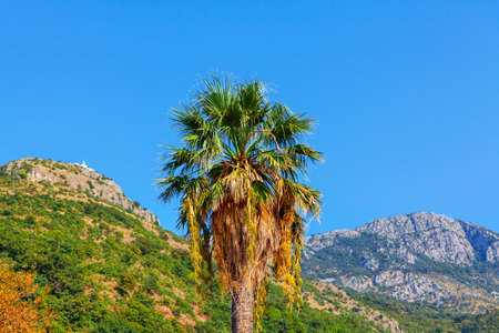 Single palm tree surrounded by mountains