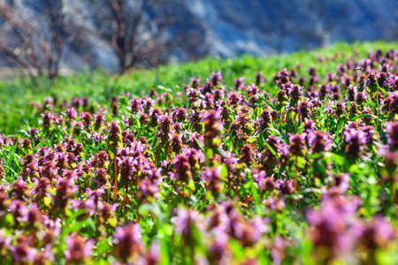 Colorful wild flowers growing on the meadow . Early Spring Blooming