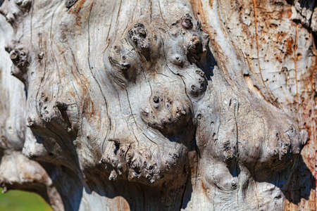 Details of wooden trunk structure Imagens
