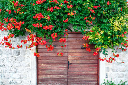 Wall with wooden gate and flowers