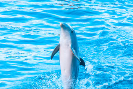 Dolphin Jumps Out Of Water . Happy aquatic animal
