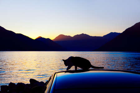 Black cat silhouette at the car roof . Cat in the twilight at the coast . Water bay with mountains