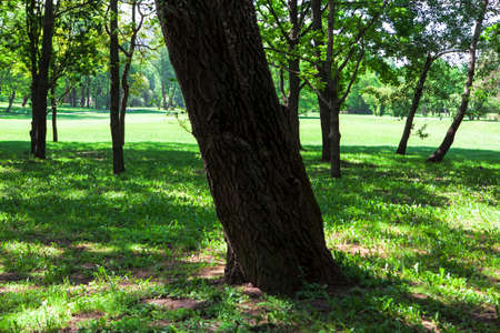 Tree trunk in the shadow . Shade under the tree in the summer . Green meadow with lawn Imagens