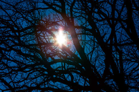 Star shining through the branches . Mysterious night in forest . Witching hour Imagens
