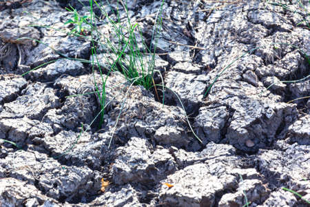 Grass growing in the drought soil . Dry climate nature Imagens