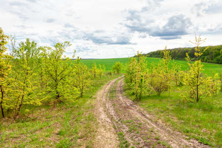 Nobody on the country road . Direction to nowhere . Dirty road with green nature