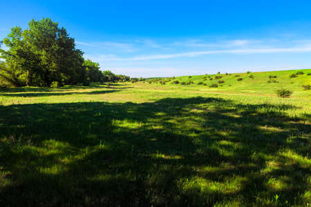Shadow on the green meadow . Idyllic summer nature . Grassland and blue sky Stok Fotoğraf