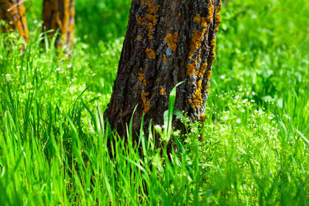 Tree trunk and green grass in the sunlight . Natural spring scenery