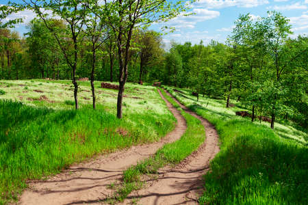 Country road in the forest . Green meadow and trees in the springtime . Walking into spring nature Stok Fotoğraf