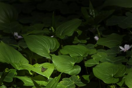 Leaves with a Hornet Stok Fotoğraf - 874531