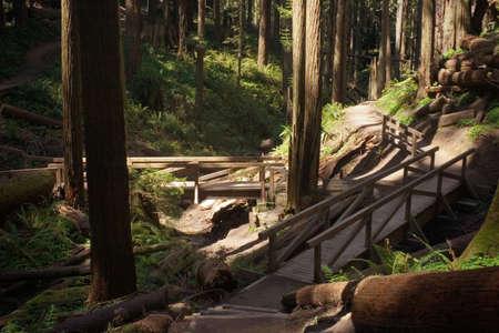 Footbridges in the Redwoods photo