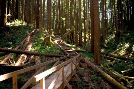 A Wooden Bridge in Redwood Park, Arcata, California photo