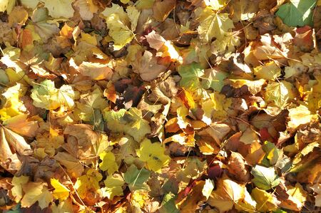 variously: A carpet of variously coloured Autumn leaves