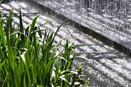 water feature: Water reeds in front of water feature or waterfall