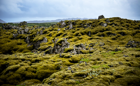 Icelandic lava field covered in moss Фото со стока