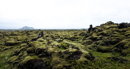 Moss covered volcanic landscape in Iceland Stok Fotoğraf