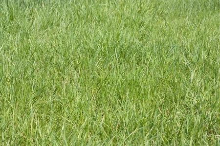 Green grass field top view