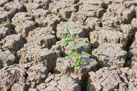 Plant in dried cracked earth