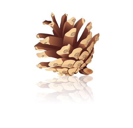 Pinecone on a white background  Stock Vector - 17114831