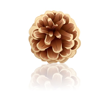 Pinecone on a white background Stock Vector - 17333721